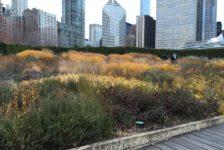 Place Value: Empowering Landscape Architects to Measure the Economic Benefits of Designed Landscapes
