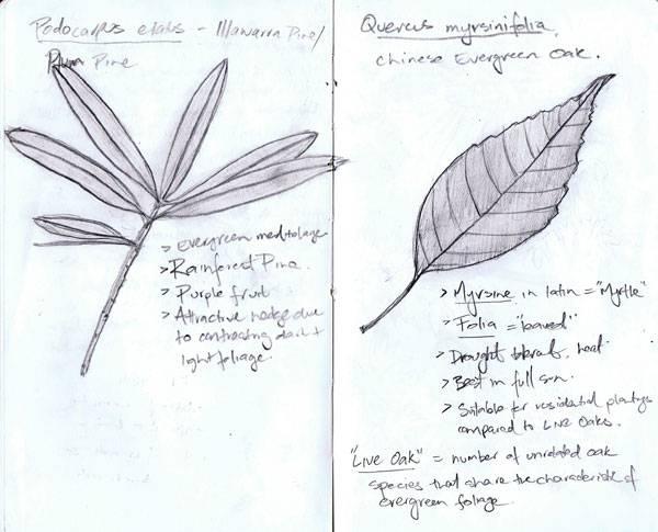 Leaf explorations identifying new species. Image credit: Paul McAtomney