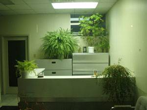 Image: dentist office plants. Photo credit: By Anthony Easton, via Flickr. SA-CC 2.0