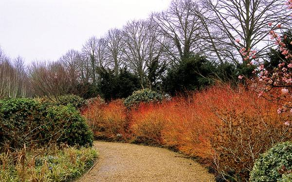 Image credit: Anglesey Abbey Winter Gardens (National Trust), Cambridgeshire, England, by ukgardenphotos, via Flickr. Licensed under CC 2.0