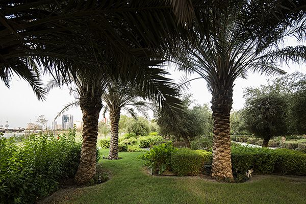 """Trees and shrubs in """"New Age"""" side of the garden. Photo Credit: Nelson Garrido©"""