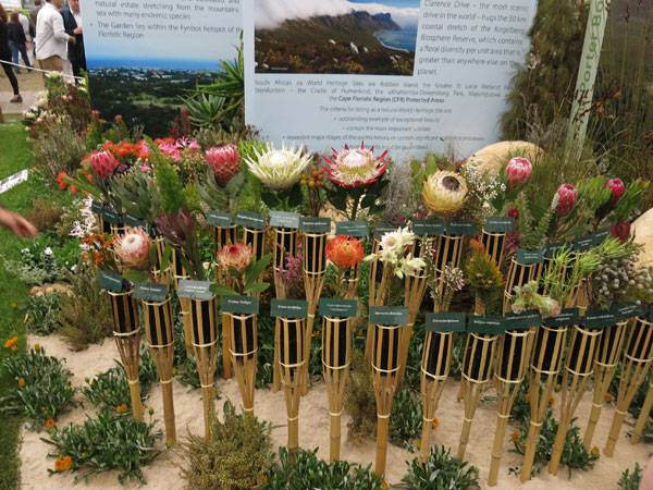 This picture shows an extract of this year's Kirstenbosch South Africa Exhibit at the Chelsea Flower show. photo by Maria Schallar, 2016, private source.