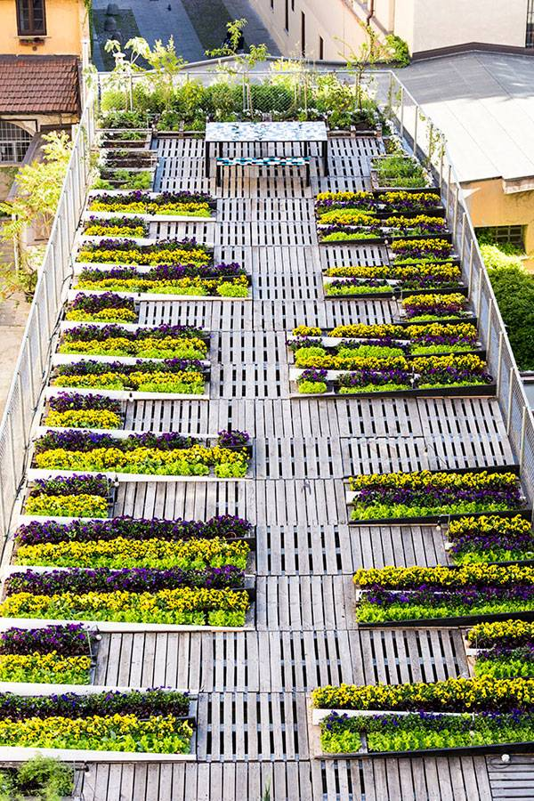 Best Green Roof Designs