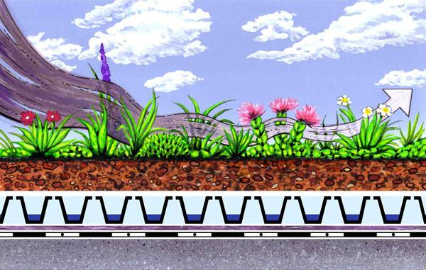 Ecological Benefits of Green Roofs