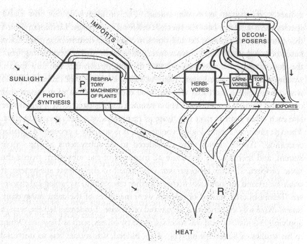 H. T. Odum, Energy and Matter Flows Through an Ecosystem. Model adapted from his 1957 study of Silver Springs, Florida. Image source: Wikimedia Commons.
