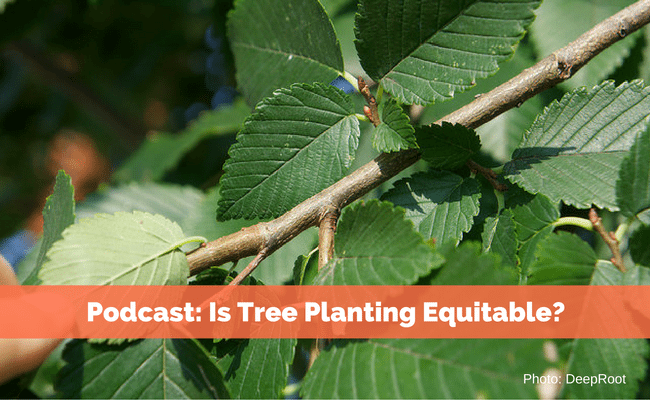 Podcast: Is Tree Planting Equitable?