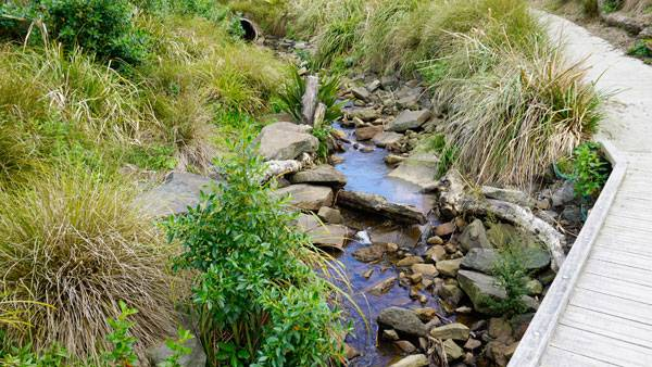 La Rosa Reserve Stream Daylighting. Photo credit: Boffa Miskell