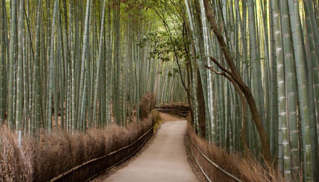 Bamboo Forest. Arashiyama
