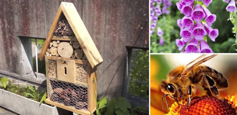 Designing for Bees: What is This Buzz all About?