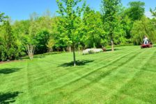 3 of the Best Methods For Establishing Grass