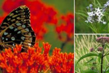 Top 10 Flowering Perennials to Brighten Any Rain Garden