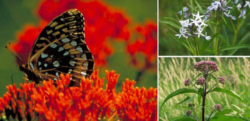 Top 10 Flowering Perennials to Brighten Any Rain Garden