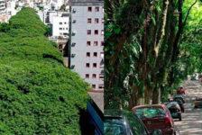 GONÇALO DE CARVALHO