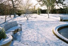 Garden Healthy During Winters