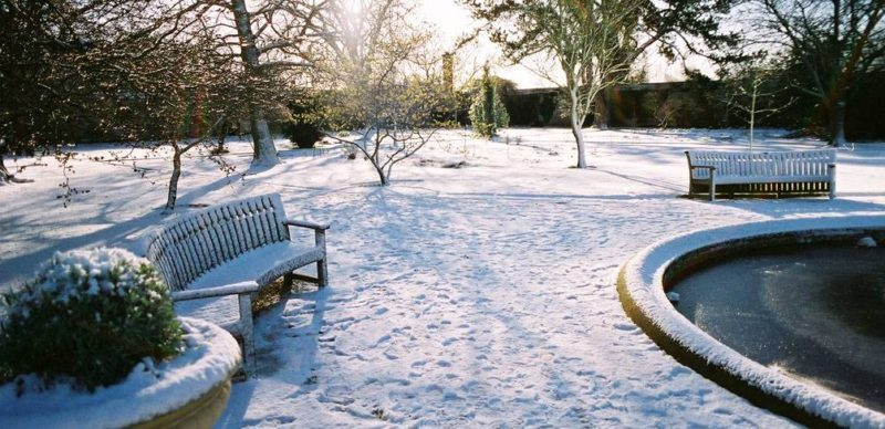 Garden Healthy During Winters