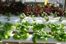 Garden Year Round with Indoor Hydroponics