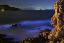The Beauty and the Beast of Bioluminescent Algae