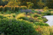 10 of the Most Common Mistakes People Make in Planting Design and How to Avoid Them