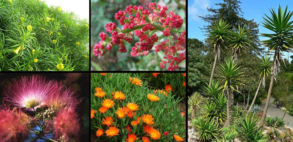 10 Mediterranean Plants You Should Never Use In Your Design
