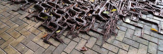Street trees; why are they dying? Photo: Source. licensed under CC 1.0