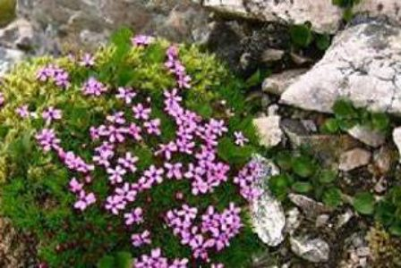 Top 10 Tundra Plants For Landscape Architects Land8