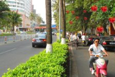 5 Reasons Why Planting Fruit Trees Along Sidewalks is a Terrible Idea