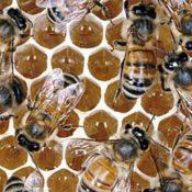 Bee keeper in action; credit: shutterstock.com