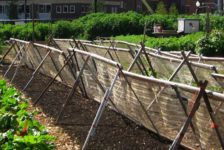 The Many Benefits of Urban Agriculture