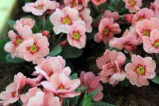 Gardenia Fair – The Spring Fair