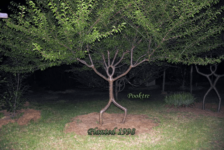 Pooktre – The Art of Growing Trees into Man-made Forms