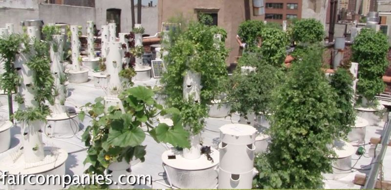 9 Ways to Incorporate Edible Planting into the Urban Landscape
