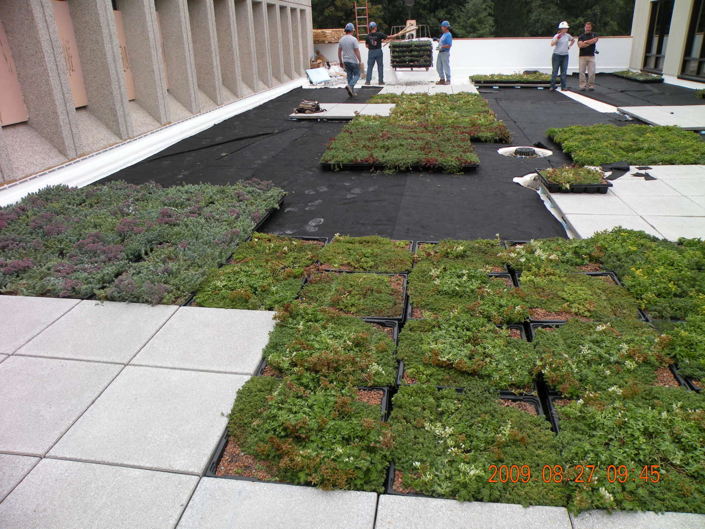 Woodlawn Greenroof construction 1