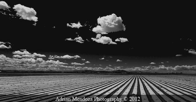 Crop rows in the California Delta