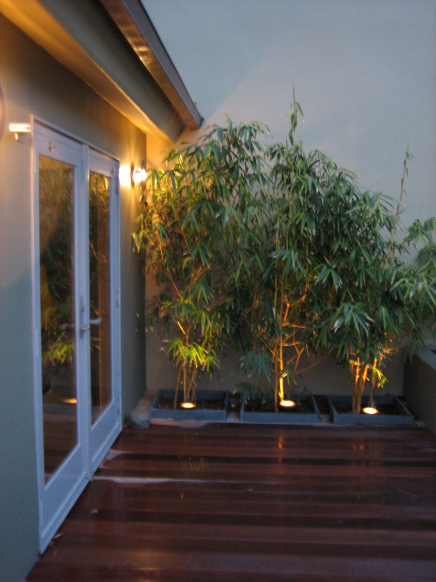 up-lit bamboo