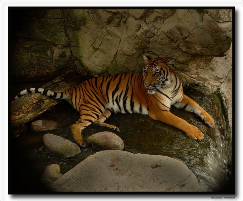 """Asian Diorama """"Cats & Bears"""" exhibit – Fort Worth Zoological Park"""