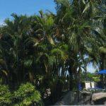 tropicallandscaping12