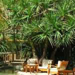tropicallandscaping14