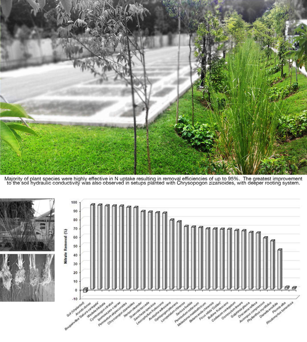 Plant screening for application in bioretention system