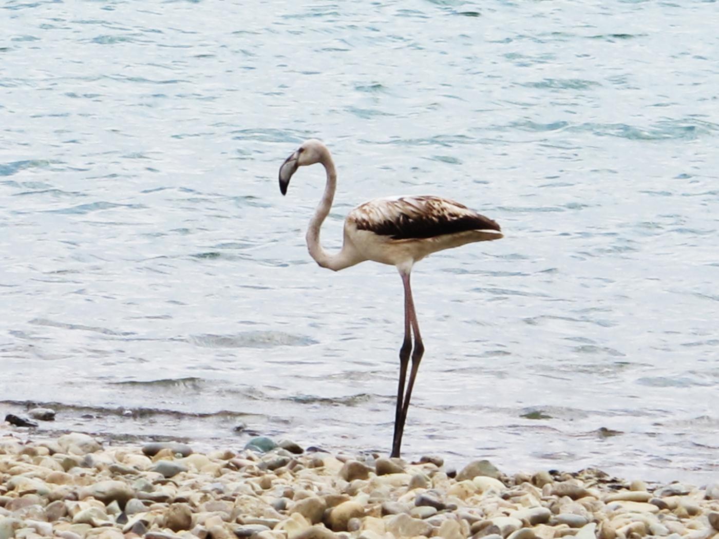 Flamingo in Chitgar Lake - Land8