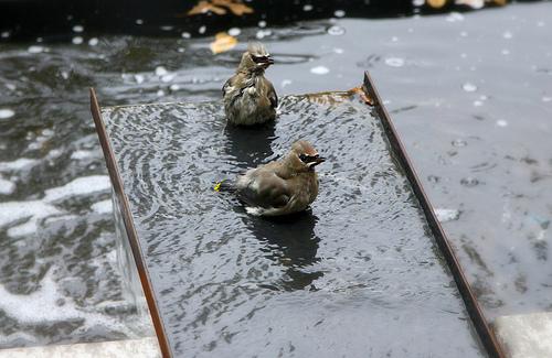 Birds at Play