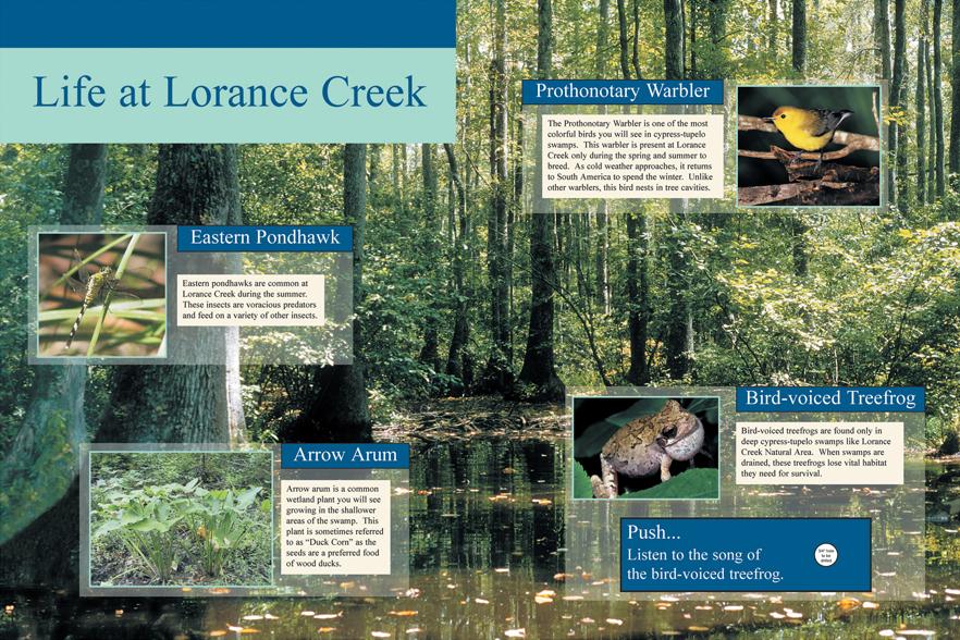 Life at Lorance Creek