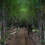 9780-Bambooforest