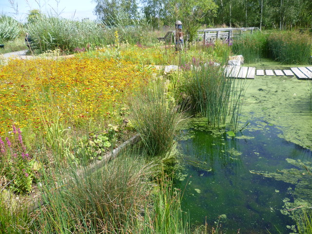 RBC Rain Garden at the London Wetland Centre by Marathon CC2.0