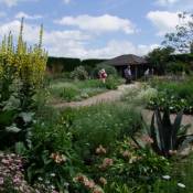 At Beth Chatto's Dry Garden in Colchester, UK, a sophisticated knowledge of plants supported transformation of a parking lot into a multisensory experience.