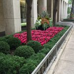 Plaza on Dewitt - 2. Summer Annuals