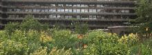 Barbican - Planting by Nigel Dunnett
