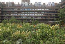 Barbican - Planting by Nigel Dunnett
