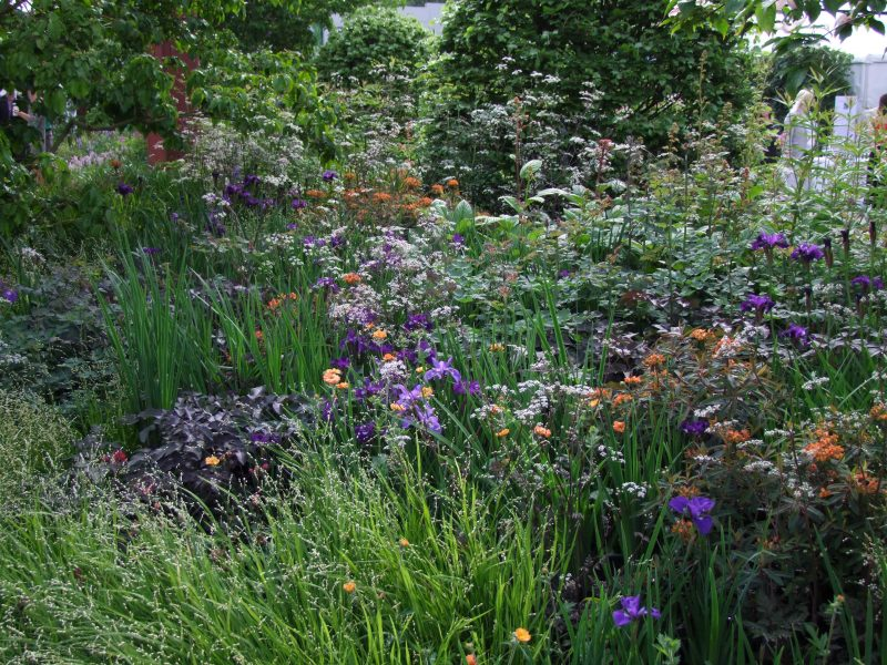 Intermingled Planting, Tom Stuart-Smith Studio, Chelsea Flower Show 2019
