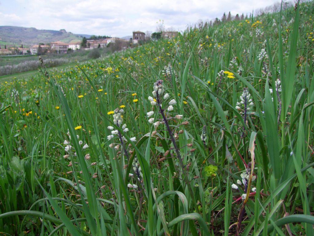 Meadow outside Orvieto, Italy