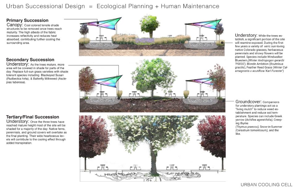 The design demonstrates the evolution of the landscape through succession planting. As shade trees mature, the landscape will evolve from grasses and sun-loving perennials to shade tolerant ground covers. Image: Dig Studio